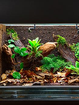 Top 10 : les plus beaux vivariums en verre